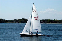 racing keelboat sail : jib (one-design) BUCCANNEER 18 Schurr Sails