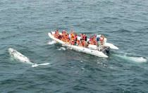 rescue boat : rigid inflatable boat (outboard, twin engine, center console) MOON WORK 1040 astillero lunamar semirrigidas moon