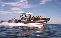 rigid inflatable boat (passenger boat, outboard, triple engine, center console) 33' NEPTUNE Polaris boat