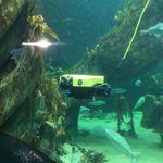 intervention underwater ROV / observation
