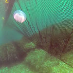 jellyfish-control boom / floating / sheltered waters