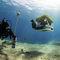 observation underwater ROV