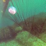 barreira antimedusa / flutuante / para águas calmas