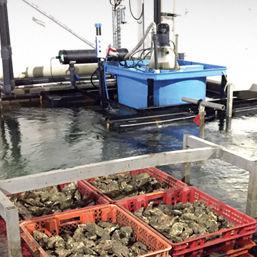 aquaculture breeding pond