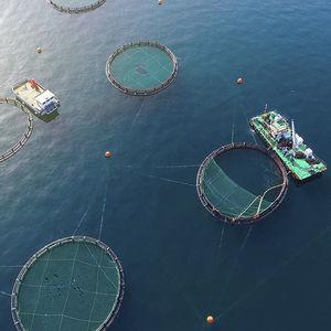 aquaculture fish cage / plastic / floating
