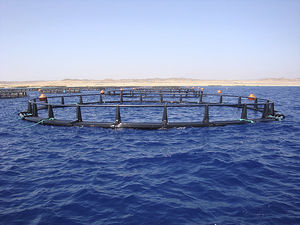 aquaculture fish cage / HDPE / round / floating