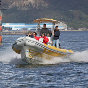 sightseeing boat professional boat