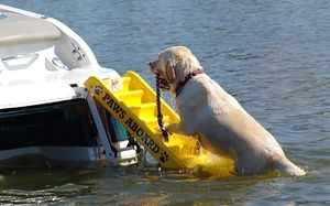 folding ladder / for boats / for pets / stern