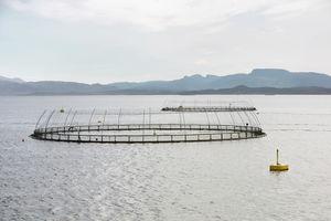 fish farming fish farming cage / for aquaculture / plastic / round