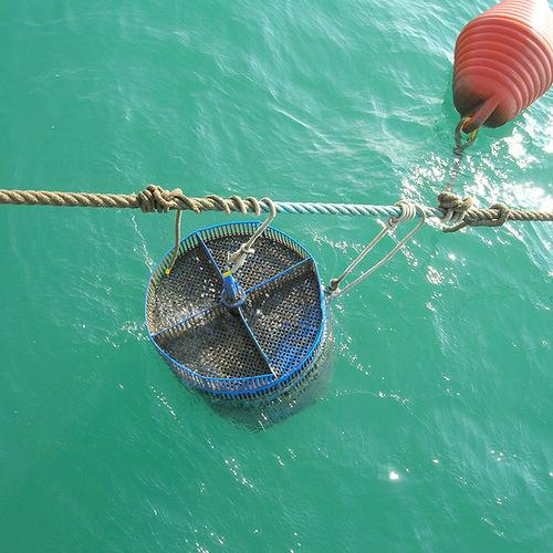 aquaculture breeding tank / for mussel farming / transport / fish storage