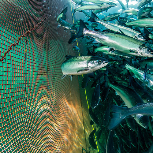 aquaculture net / for fish cage