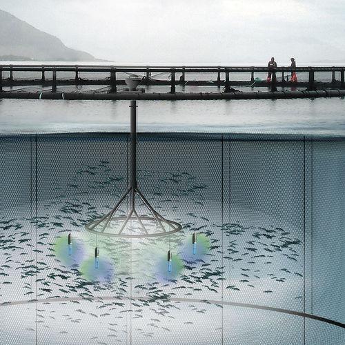 aquaculture feeding system / fish farming
