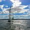 foiling sport catamaran