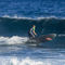 surf SUP / wooden / EPS