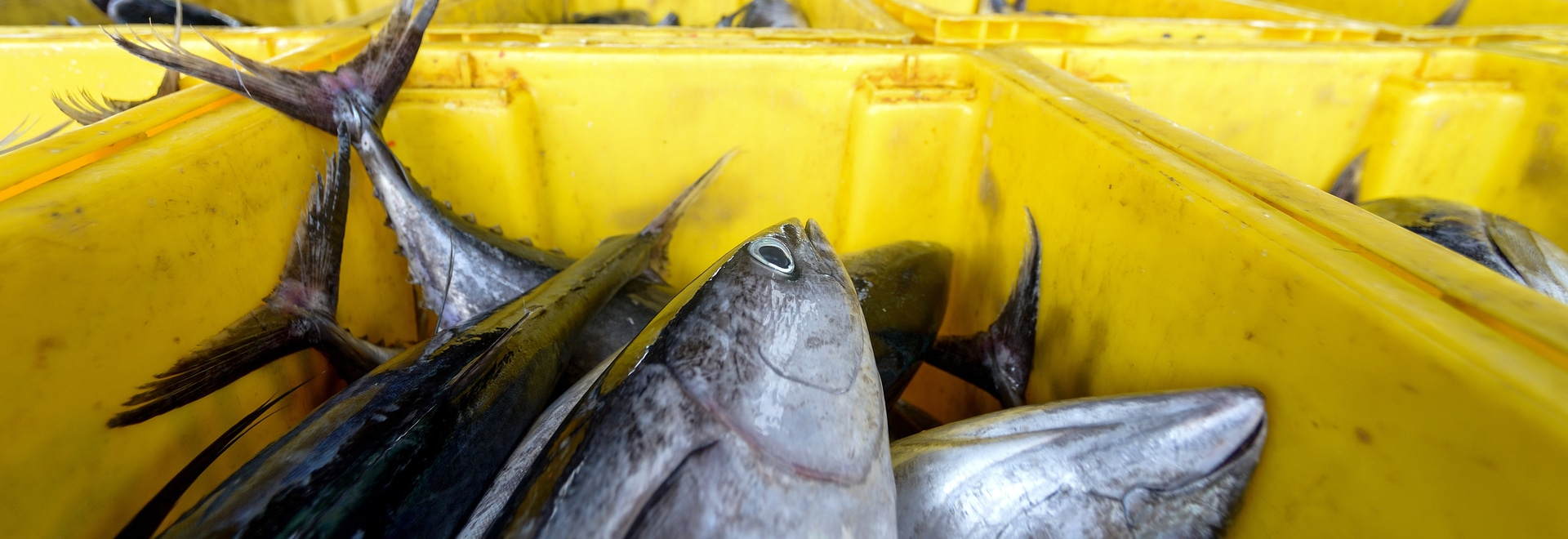 Clean energy in aquaculture: using technology to grow healthy fish