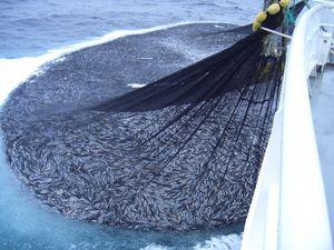 釣り用ネット