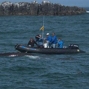 船外インフレータブルボート / 折り畳み式 / 半硬式 / 潜水