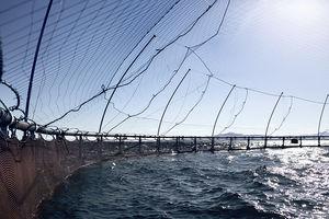 rede para gaiola de peixes
