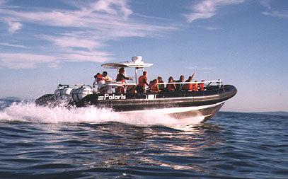 barco profissional barco de passageiros / com motor de popa / barco inflável semirrígido