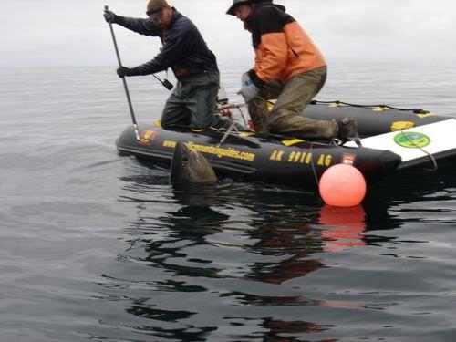 bote catamarã / com motor de popa / máx. 6 pessoas