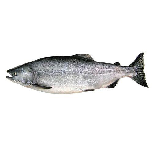 tela para aquicultura / para gaiola de peixes